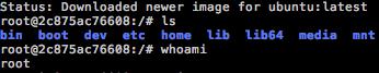 An Ubuntu shell, running within Docker
